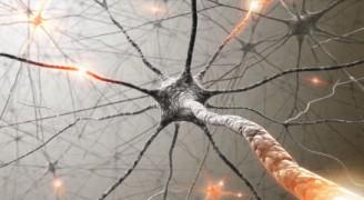 Multipl Skleroz (MS) Nedir?